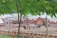 Oazis Balvany 20190621 006